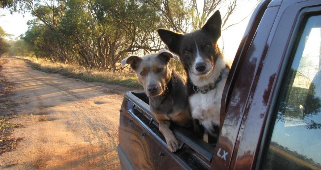 Grace & Kelly Stickland Family Wongan Hill