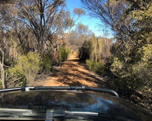 Great Southern Outback Tours-Woodlands-rocks-trails-outback-wilderness