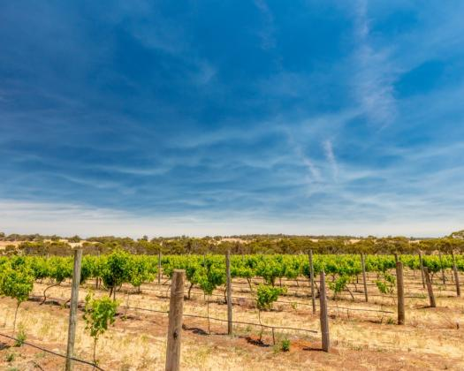 Downderry Wines, Narrogin-thumbnail