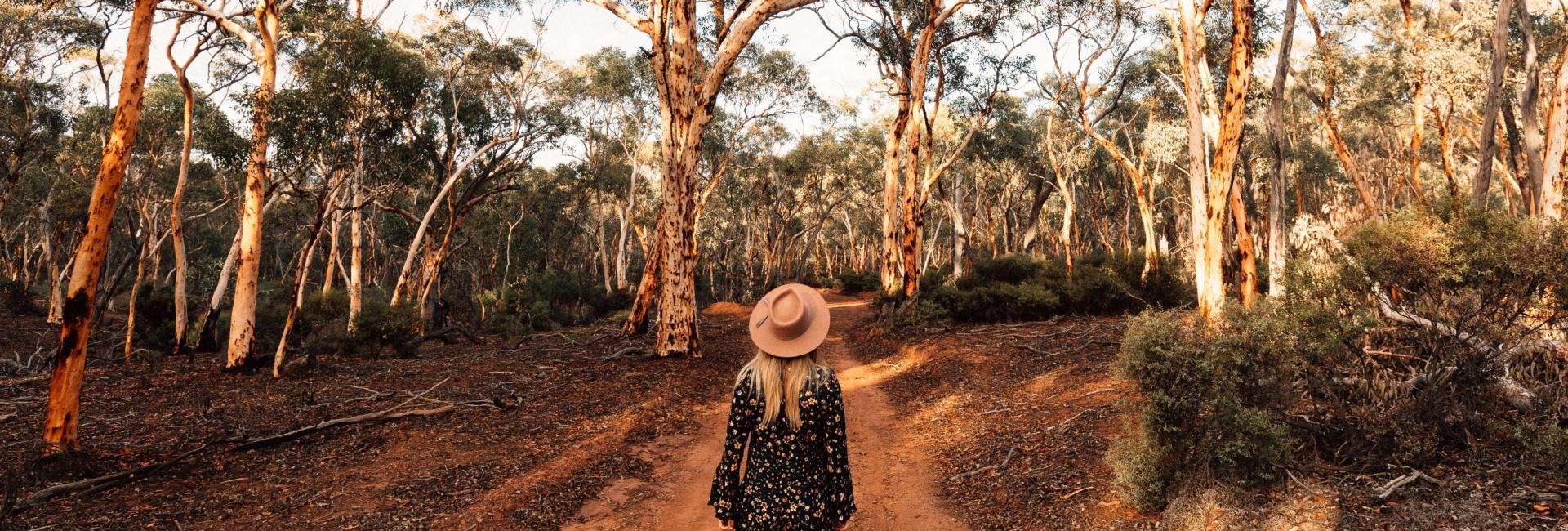 melissa-findley-high-res-wheatbelt-dryandra_woodland-jumbotron